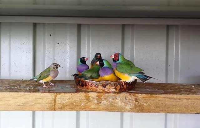 У птиц не должно быть лишнего веса