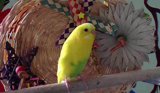 Птичка с желтым оперением