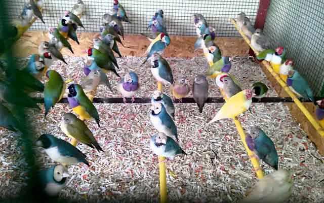 Плохое питание может подорвать здоровье птиц