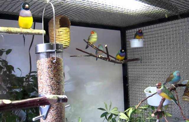 Птицам нужно специальное освещение