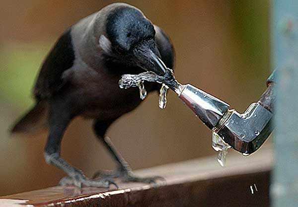 Доступ к воде обязателен