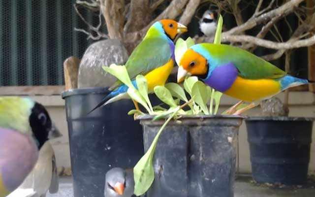 Плохие условия содержания портят поведение птиц