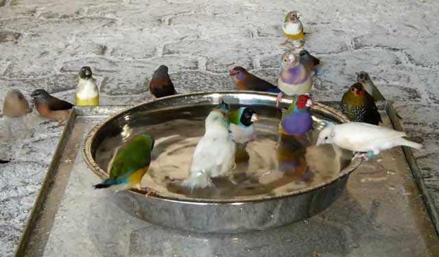 Купания очень полезны для птиц