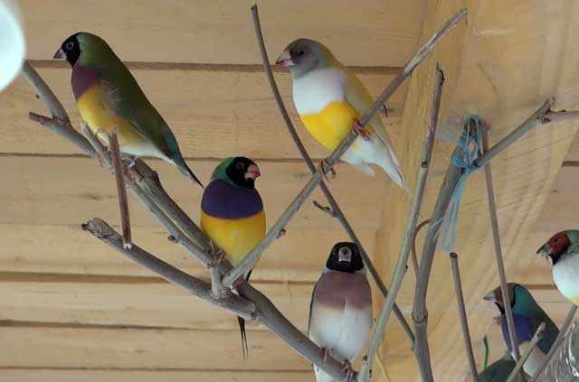 Не перекармливайте птиц