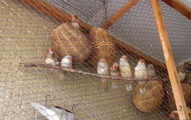 Плетеные закрытые гнезда