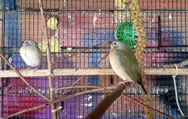 Гнездящимся птицам нужно особое питание
