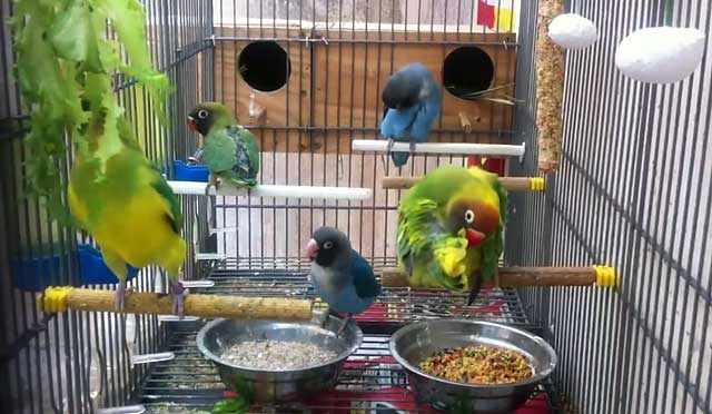 У попугая всегда должна быть еда в клетке