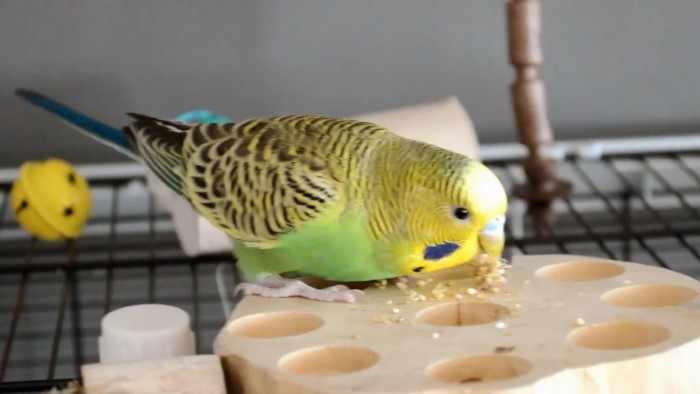 Как я пытался с помощью попугая поймать другого попугая и что из этого вышло